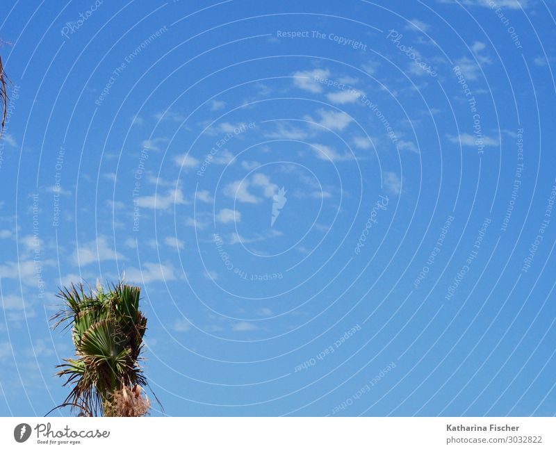 Palm crown and sky Environment Nature Sky Spring Summer Plant Bright Calm Blue sky Sky blue Summer vacation Summery Palm tree Palm frond Palm roof Colour photo