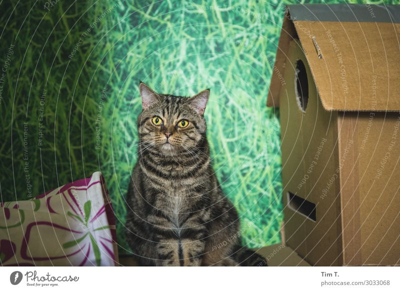 Hangover to Papphaus No. 28 Animal Pet Cat 1 Contentment Domestic cat Cardboard Colour photo Interior shot Close-up Deserted Copy Space top Day Light Looking