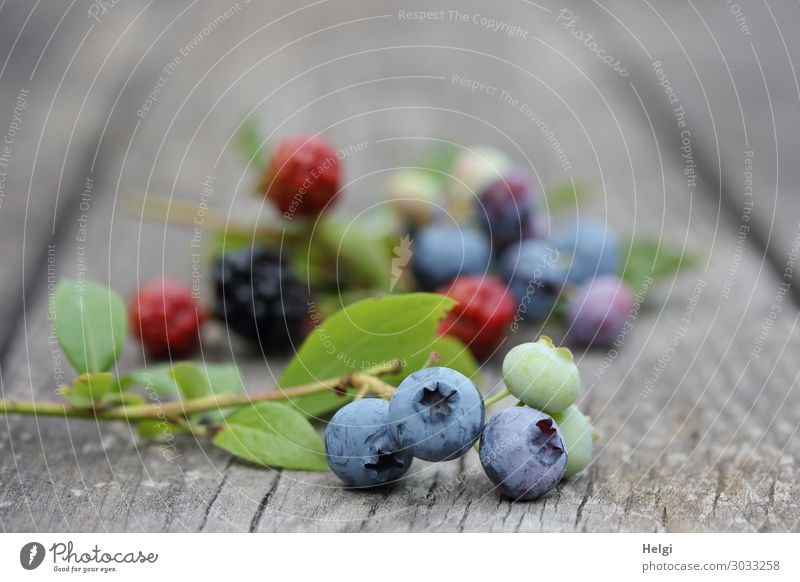 freshly harvested ripe blueberries and blackberries lie on an old wooden table Food Fruit Blueberry Blackberry Nutrition Organic produce Vegetarian diet Plant