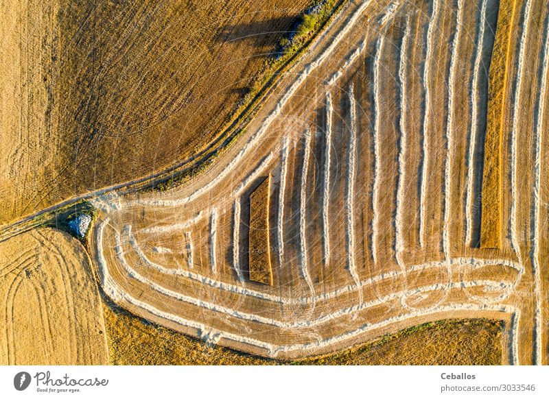 Cereal fields in Castilla y Leon Spain bird´s eye view Sky Nature Summer Plant Colour Landscape Sun Clouds Yellow Meadow Bright Horizon Fresh Field Gold Growth