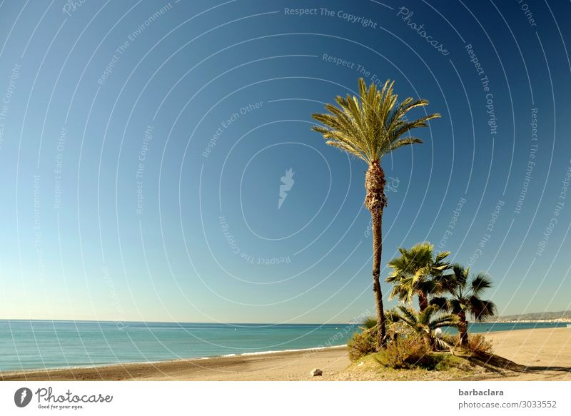 Andalusia in winter Vacation & Travel Tourism Freedom Beach Nature Landscape Elements Water Sun Winter Climate Plant Exotic Palm tree Coast Ocean Costa del Sol