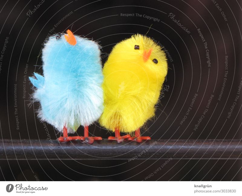 beeping voices Animal Bird 2 Decorative bird Stand Small Cute Blue Yellow Orange Black Emotions Sympathy Friendship Together Colour Soft Pair of animals