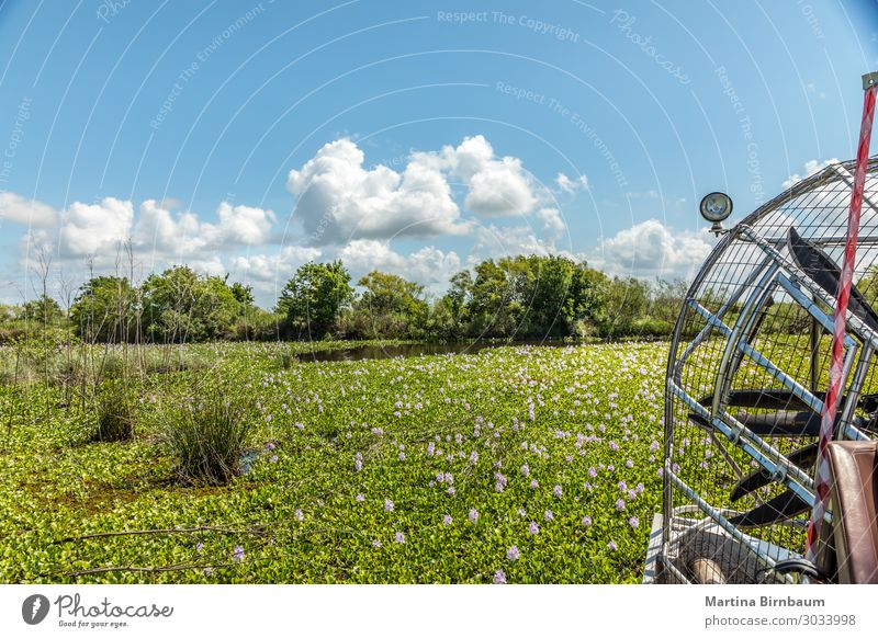 Airboat driving in a swamp looking for the alligators Beautiful Vacation & Travel Summer Nature Landscape Plant Sky Flower Meadow Lake Natural Blue Green Pink