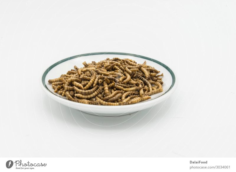mealworms crustaceans tenebrio molitor isolated Bowl Nature Animal Pet Beetle Worm Packaging Old Freeze Creepy Wild Brown Gold White Angler animals background