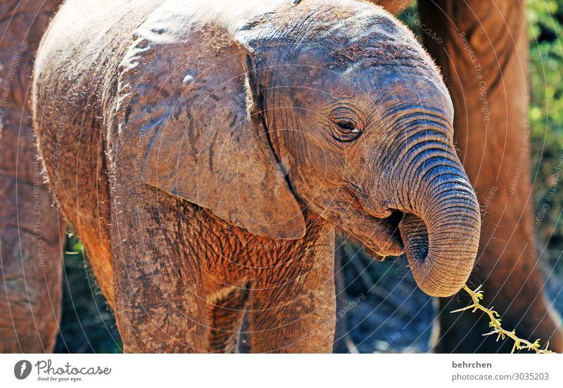 dumbo addo elephant national park Wilderness Nature Freedom Elephant Animal protection Love of animals Ivory Elephant skin Baby elefant Wanderlust Exotic