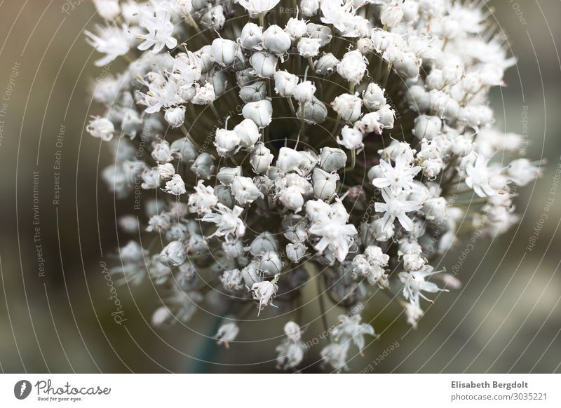 White flower Environment Nature Plant Sun Summer Beautiful weather Flower Blossom Garden Meadow Blossoming Bright Cold Near Natural Round Gloomy Purity Esthetic