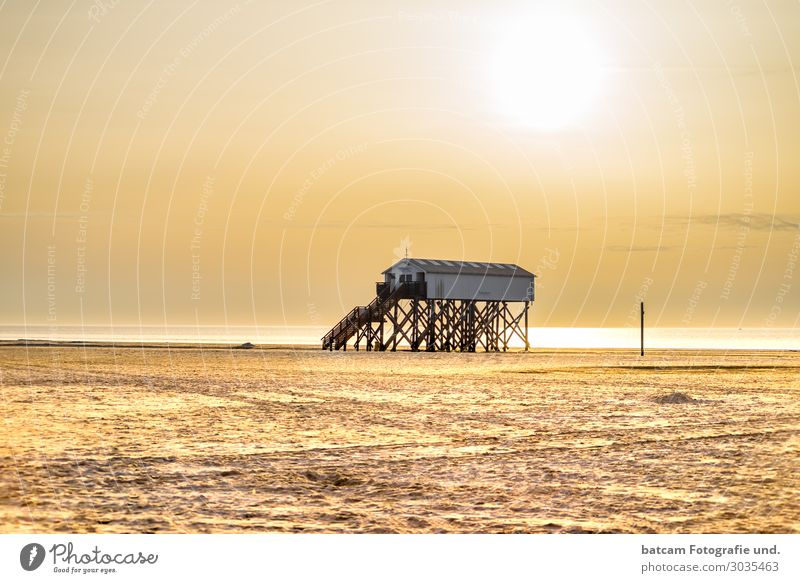 Beach in Sankt Peter Ording in sunlight with pile dwellings spo Lifestyle Leisure and hobbies Vacation & Travel Tourism Summer Summer vacation Sun Ocean