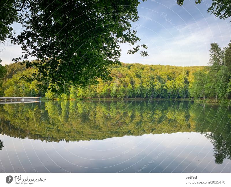 Dam idyll I Calm Nature Water Sky Summer Tree Forest Coast River dam Relaxation Fresh Natural Blue Green Leisure and hobbies Idyll Reflection Colour photo