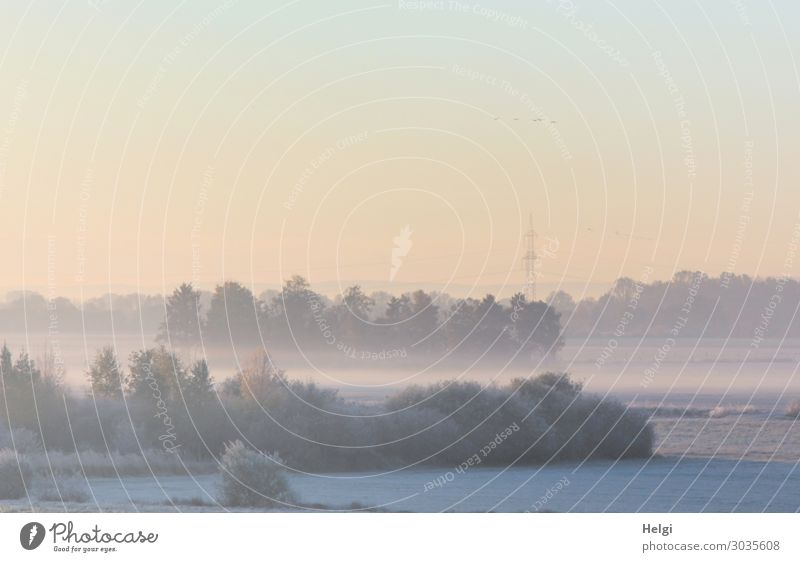 Landscape with morning fog and diffuse sunlight in the moor Instant messaging Environment Nature Plant Sky Autumn Fog Tree Bushes Meadow Bog Marsh Stand