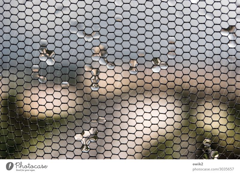 entanglement Drops of water Window Gauze Fly screen Hang Glittering Small Near Wet Narrow Blur Distorted Grow hazy Colour photo Subdued colour Interior shot