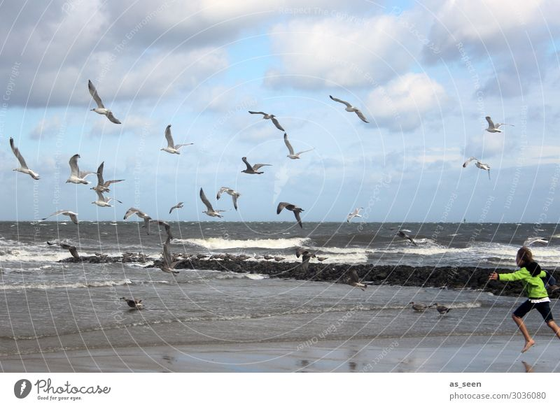 The seagulls drive away Vacation & Travel Beach Ocean Waves Parenting Development Child Boy (child) Infancy Youth (Young adults) Life Body 8 - 13 years Jacket