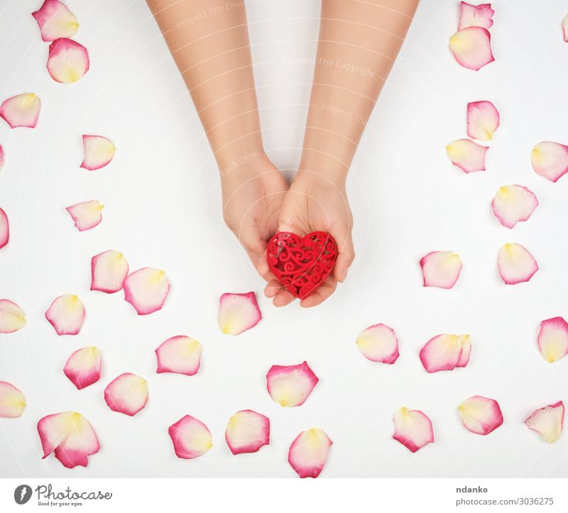 female hands hold red heart, white background Woman Human being Colour Beautiful White Red Hand Flower Adults Life Love Feasts & Celebrations Pink Decoration