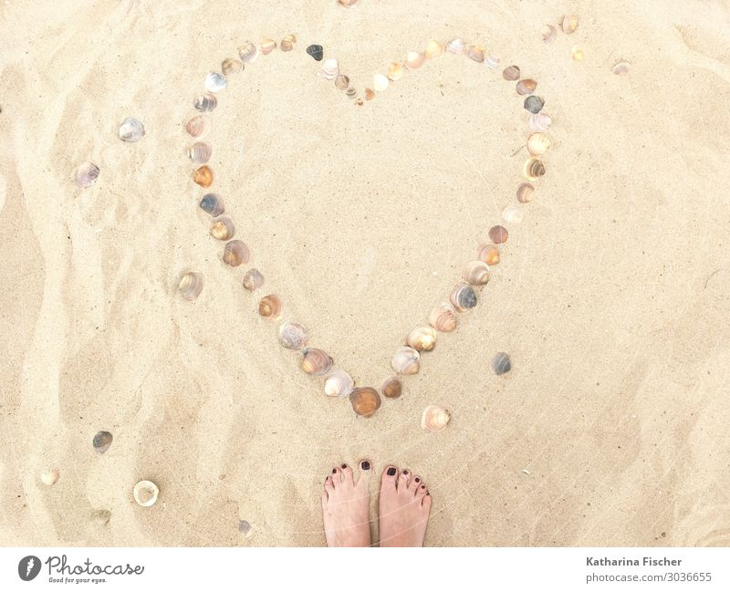 Heart Mussels Sand Beach Nature Spring Summer Emotions Love beach signs Cockle Feet Sandy beach Summer vacation Sign Trust Symbols and metaphors Callousness