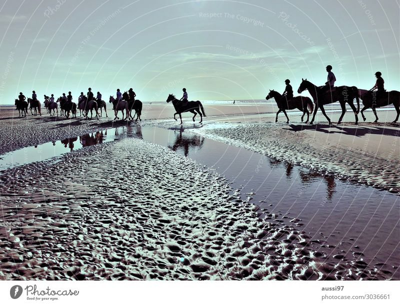 Vacation & Travel Relaxation Beach Group Group of animals Horse Mud flats Evening sun Rider Gray (horse) Tideway