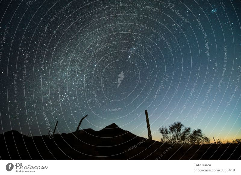 Weltschmerz | Inadequacy Far-off places Freedom Nature Landscape Plant Elements Sky Cloudless sky Night sky Stars Horizon Beautiful weather Drought Bushes