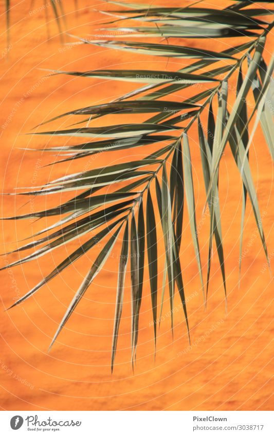 palm leaf Lifestyle Elegant Style Design Exotic Leisure and hobbies Vacation & Travel Tourism Trip Adventure Far-off places Nature Plant Tree Leaf Foliage plant