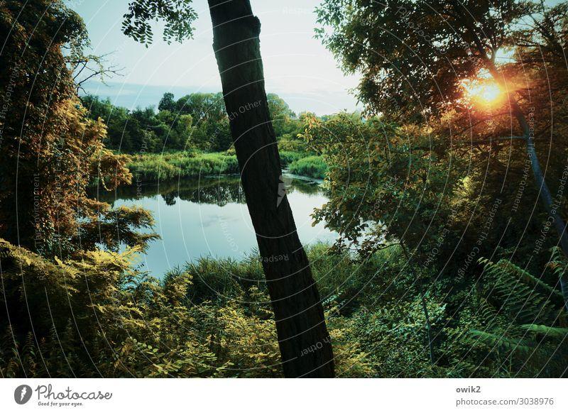Sky Nature Summer Plant Landscape Sun Tree Clouds Calm Forest Far-off places Environment Lake Horizon Illuminate Idyll