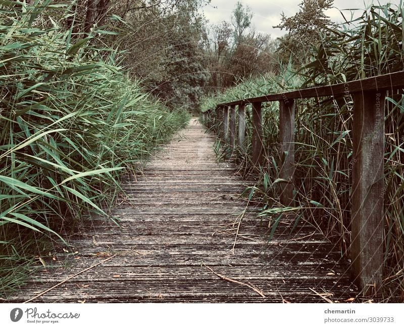 Pfad, Steg, Path, Greenery, Jungle, Dschungel Feeling Environment Grass Garden Park Contentment Creativity Colour photo Subdued colour Exterior shot Deserted