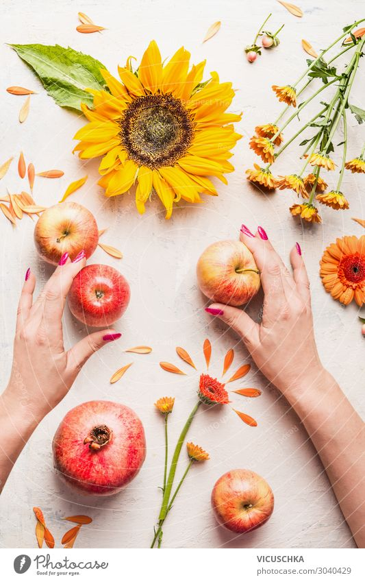 Hands holding apples on white table with sunflowers Food Apple Nutrition Style Design Woman Adults Decoration Bouquet Summer Stop Sunflower Flower Composing
