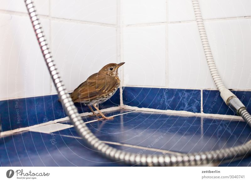 Song Thrush in the Shower Blackbird Living thing Throstle Deserted Epidemic Bird Songbirds Death Copy Space usutu Virus bird epidemic Shower (Installation)