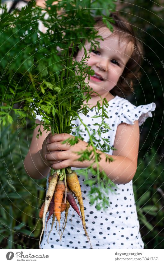 Carrots from small organic farm. Kid farmer hold carrots Vegetable Nutrition Vegetarian diet Diet Garden Gardening Plant Earth Growth Fresh Natural Green Colour
