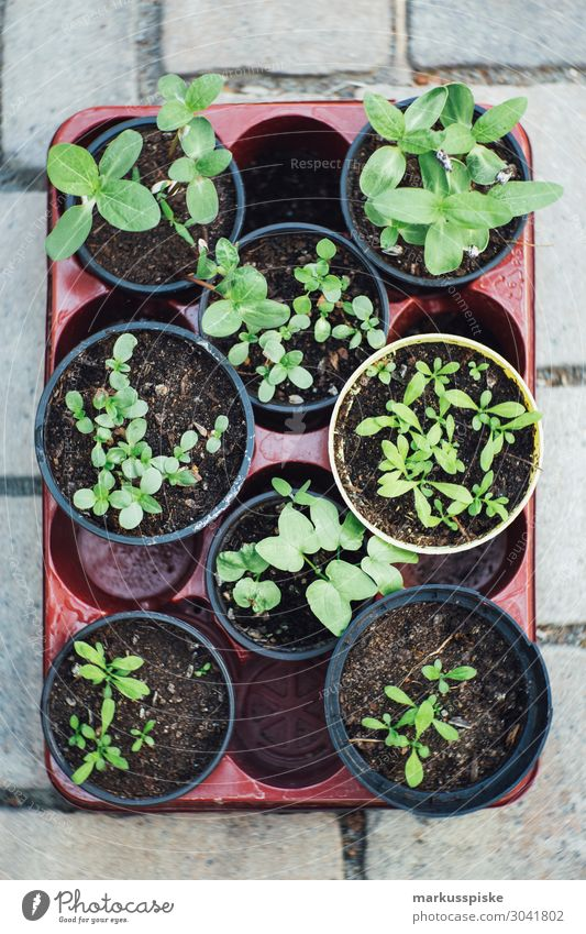 urban gardening tomatoes and herbs to raise Food Vegetable Lettuce Salad Herbs and spices Nutrition Eating Picnic Organic produce Vegetarian diet Diet Fasting