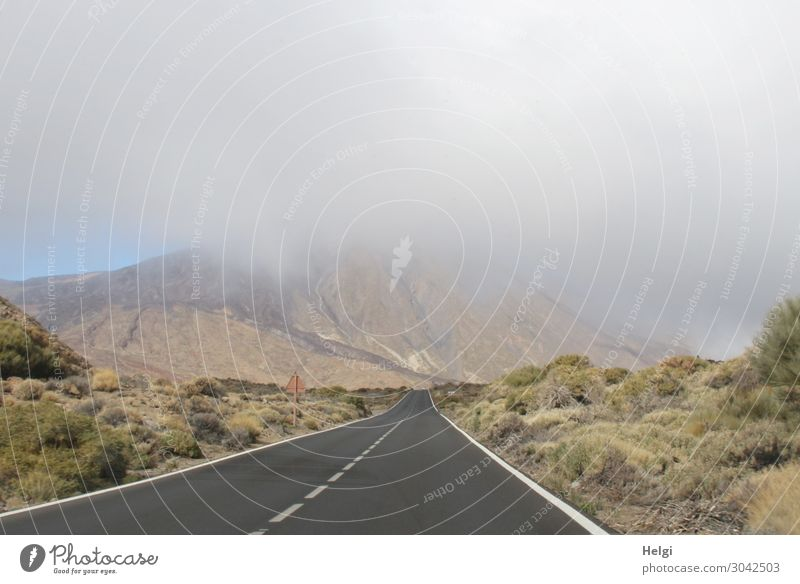lonely road in the National Park Teide on Tenerife with a view of the mountain Teide wrapped in a cloud Environment Nature Landscape Plant Winter Fog Bushes