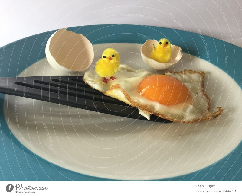 surprise egg Food Nutrition Breakfast Plate ladle Animal Chick Barn fowl 2 Baby animal Eating Feeding Looking Stand Cute Curiosity Fear of the future
