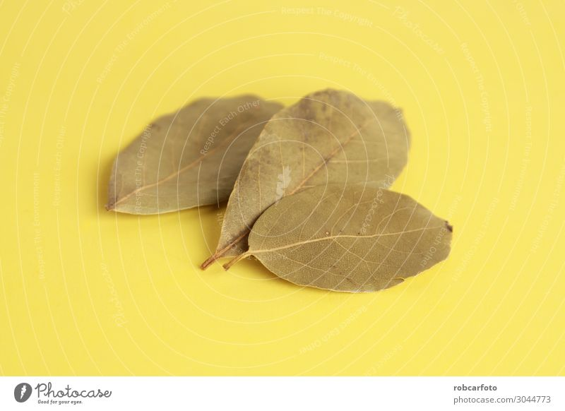 bay leaves in colorful background Herbs and spices Group Nature Plant Leaf Natural Green White Colour Tradition isolated Top Organic laurel Illustration food