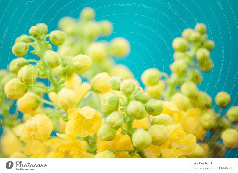 Flowers small yellow Blossom Bud Yellow Blue Plant Spring Blossoming Nature Close-up