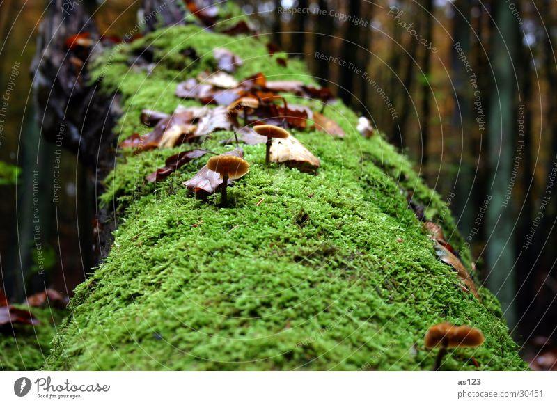 Mushroom on moss tree Forest Green Autumn Tree