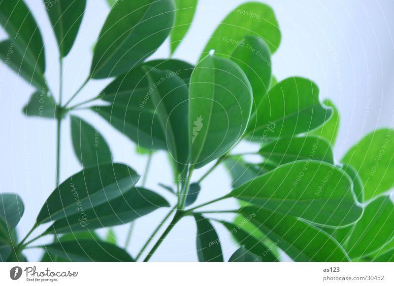 Green Plant Leaf Bright Foliage plant Houseplant Pot plant