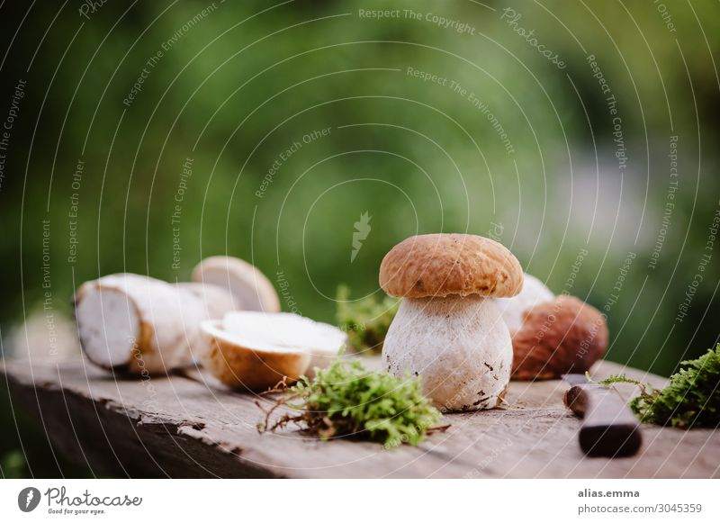 Nature Summer Beautiful Forest Food Autumn Natural Nutrition Weather To enjoy Cooking Delicious Collection Vegetarian diet Wooden board Mushroom
