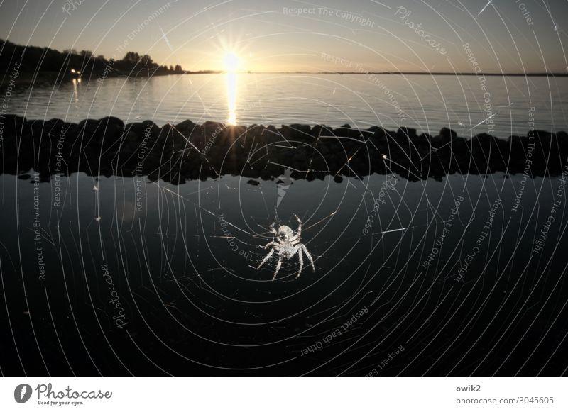 Spider with view Environment Nature Landscape Animal Water Cloudless sky Horizon Sun Autumn Beautiful weather Coast Baltic Sea Movement Hang Crawl Illuminate