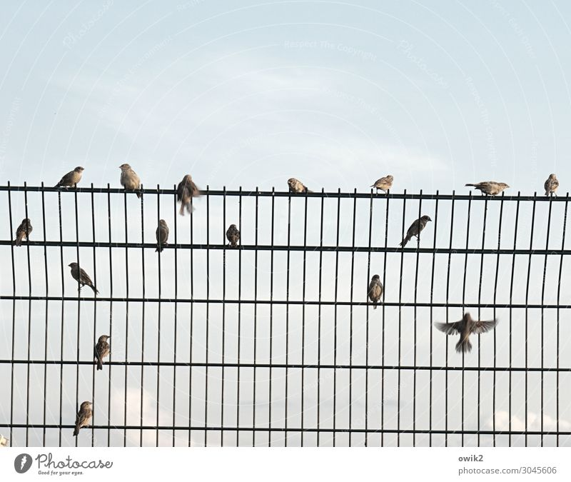 support group Sky Clouds Beautiful weather Sparrow Flock Barrier Metalware Tall Safety Protection Observe Movement To talk Flying Crouch Communicate Sit