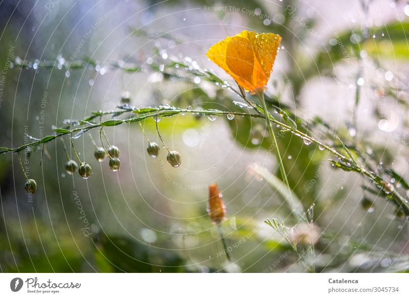 Nature Summer Plant Beautiful Green Flower Leaf Environment Blossom Meadow Garden Orange Moody Rain Glittering Drops of water
