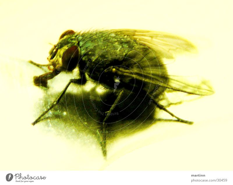 The fly Animal Insect Transport Nature Fly Macro (Extreme close-up) Detail