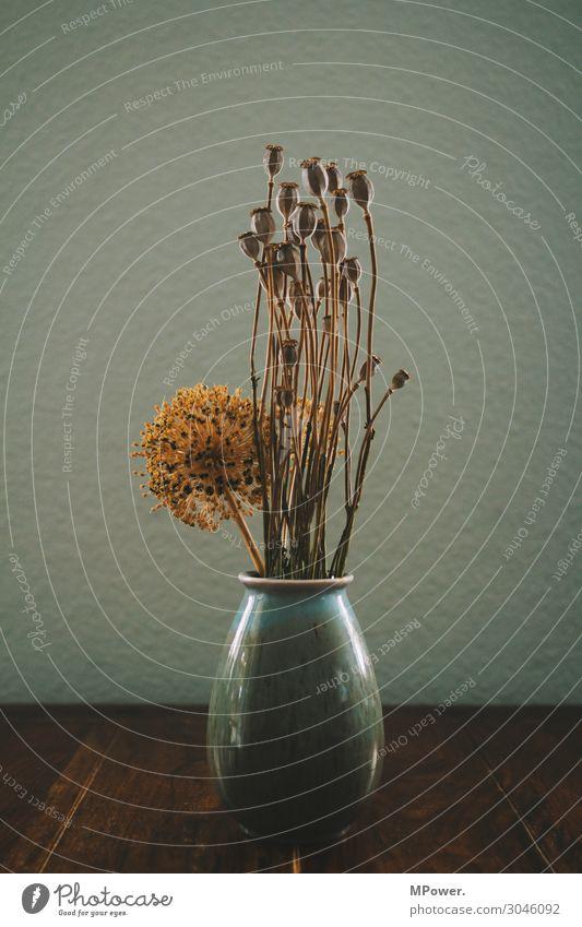 Old Plant Table Dry Poppy Still Life Vase Poppy capsule Dried flower