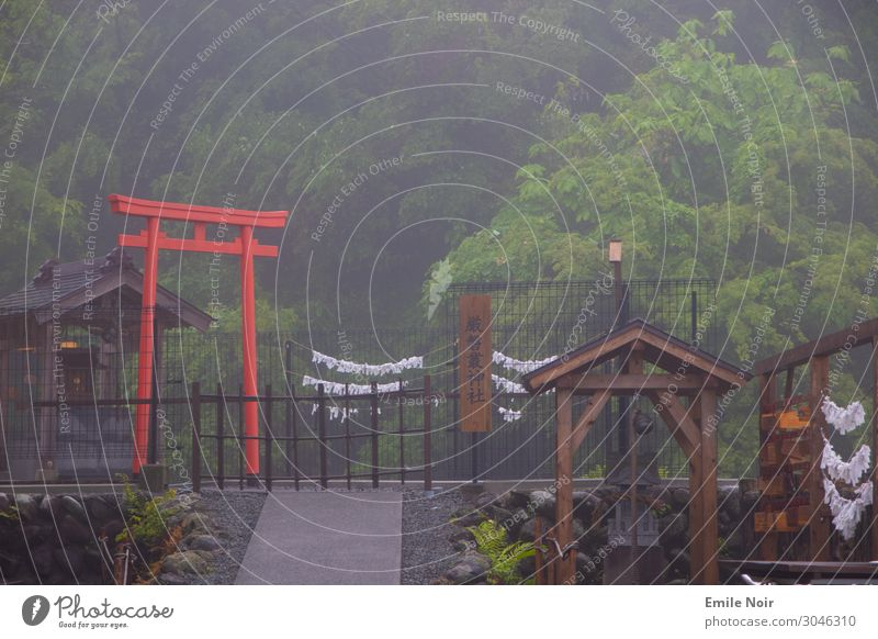 Fog Torii Fujinomiya Japan Architecture Temple O-Torii Gate Adventure Culture Surrealism Tourism Colour photo Exterior shot Day