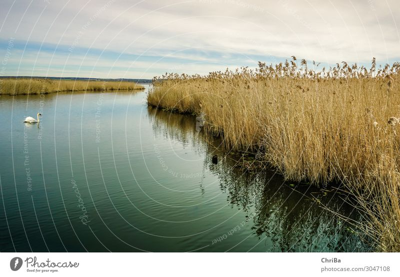Sky Nature Plant Water Landscape Clouds Animal Loneliness Winter Spring Natural Lake Horizon Wild animal Esthetic Hope
