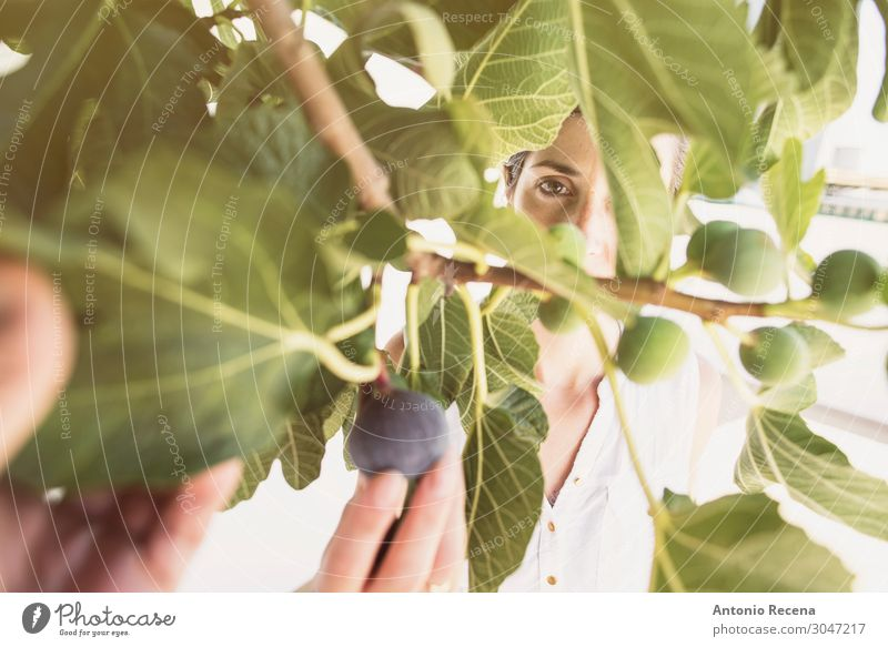 figs time Woman Human being Summer Plant Tree Leaf Lifestyle Adults Garden Work and employment Fresh Clothing Vegetable Harvest Home Mature