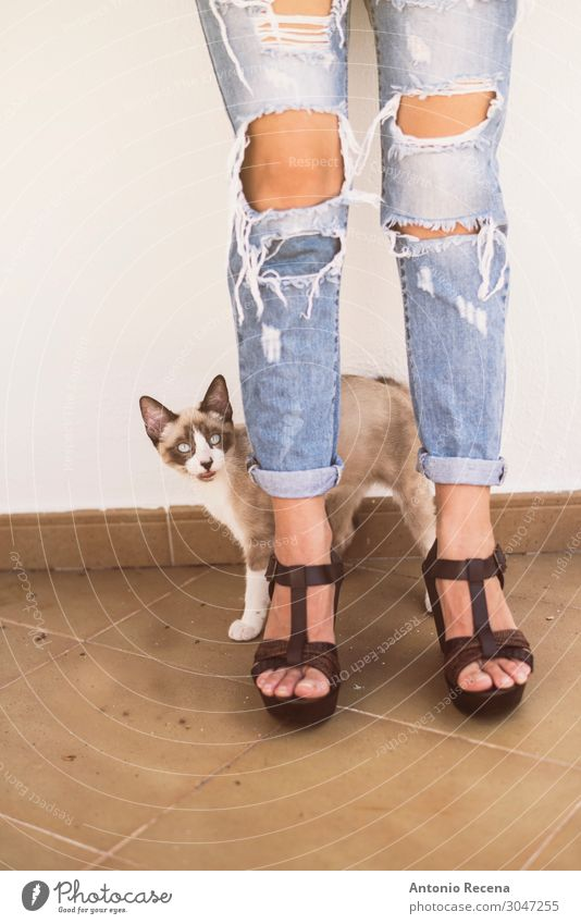 torn cat Lifestyle Style Woman Adults Animal Fashion Clothing Pants Jeans High heels Pet Cat Stand Eroticism Cute Torn torn jeans Earth hole broken attractive