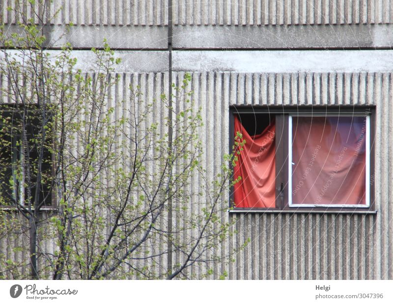 Facade of an old building with open window and red curtain Environment Plant Bushes Building Wall (barrier) Wall (building) Window To hold on Hang