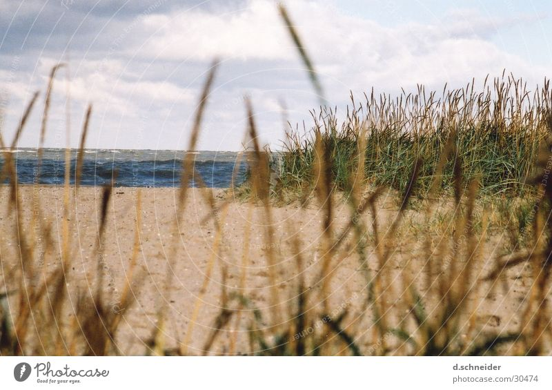 Water Sky Ocean Beach Clouds Far-off places Grass Sand Waves Coast Wind Beach dune Dune Baltic Sea North Sea