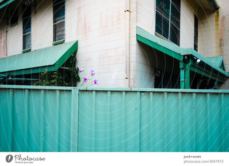 fence guard Town Colour Green Window Environment Style Facade Moody Arrangement Authentic Uniqueness Tall Corner Planning Safety Fear of the future