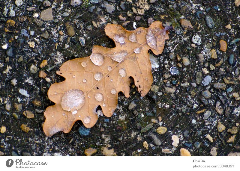 autumn cold Nature Plant Elements Earth Water Drops of water Autumn Winter Climate Bad weather Ice Frost Tree Leaf Wild plant Forest Rock Emotions Moody Calm