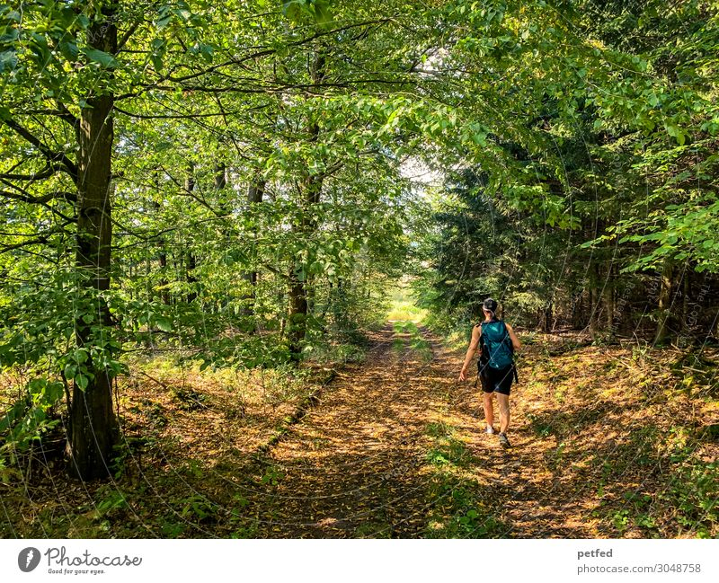 forest lights Fitness Hiking Woman Adults 1 Human being Summer Tree Forest Relaxation Going Walking Illuminate Fresh Wild Brown Green Orange Moody Serene Calm