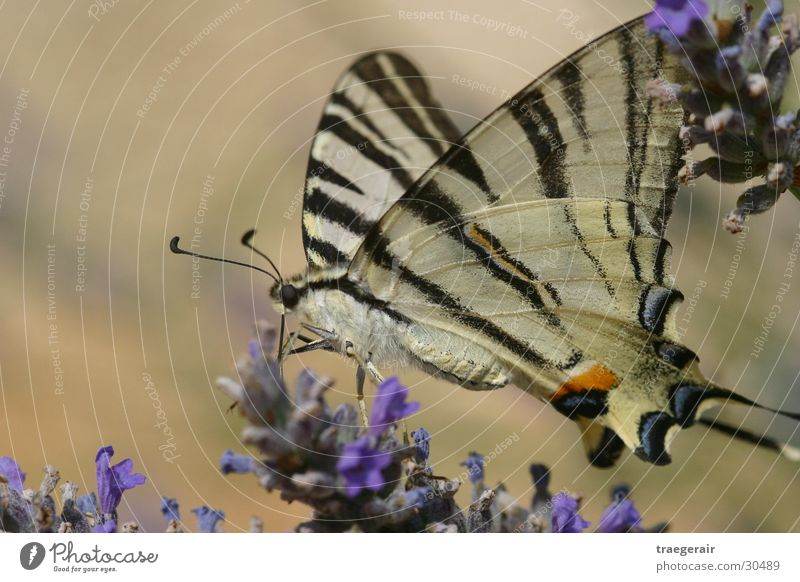 Nature Blossom Butterfly Still Life Coincidence