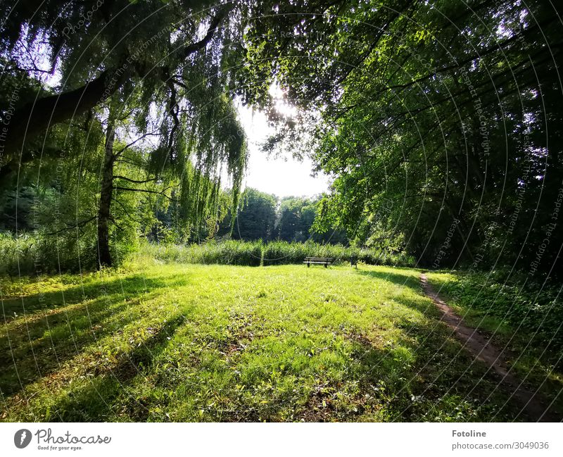 Beautiful corners... Environment Nature Landscape Plant Elements Earth Sky Summer Tree Grass Foliage plant Wild plant Garden Park Meadow Forest Bright Natural