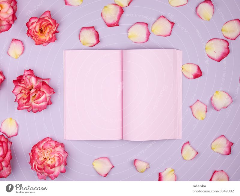 open notebook with pink blank pages Design Decoration Feasts & Celebrations Wedding Birthday Workplace Business Book Plant Flower Blossom Paper Bouquet Love